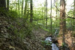 Ravine with Basic Mesic Hardwood Forest - Sam Sheline