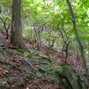 Oak - Beech / Heath Forest