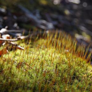 moss under light